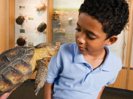 young boy looking in to the face of a turtle