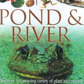 Oceans, Rivers and Ponds: Fiction & nonfiction children's
