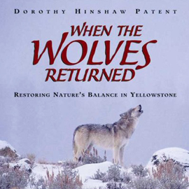 When The Wolves Returned Restoring Nature S Balance In Yellowstone