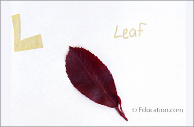 "a leaf with text saying ""L"" and ""leaf"""
