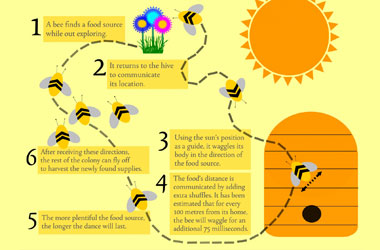 diagram of the steps a bumblebee takes
