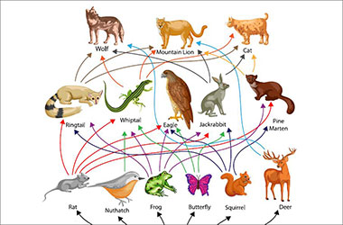 infographic of nature's food web