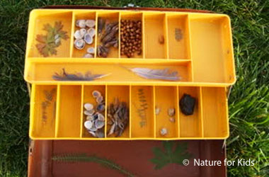 a box filled with feathers, seed, leaves, and other nature items