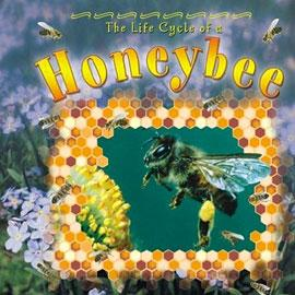 "cover of ""The Lifecycle of a Honeybee"" showing a bee surrounded by some hive illustrations"