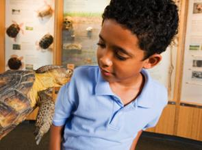young boy looking at the face of a turtle.